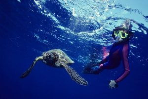 ocean diver swimming underwater with sea turtle